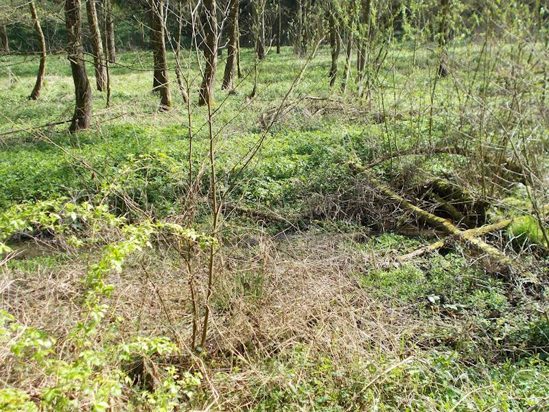 Kováň - pozemek pozemková parcela č. 836