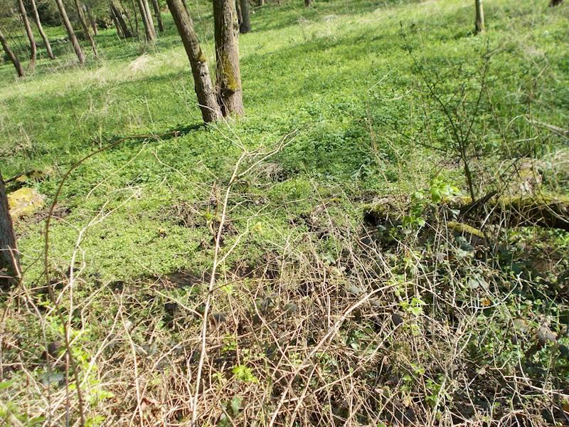 Kováň - pozemek pozemková parcela č. 853